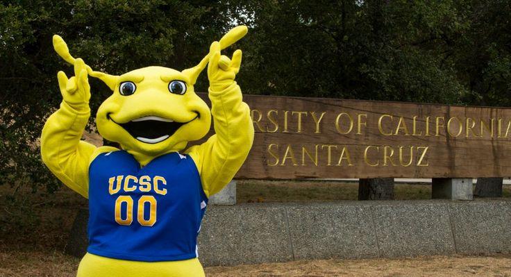 University Of California Santa Cruz Sammy The Banana Slug