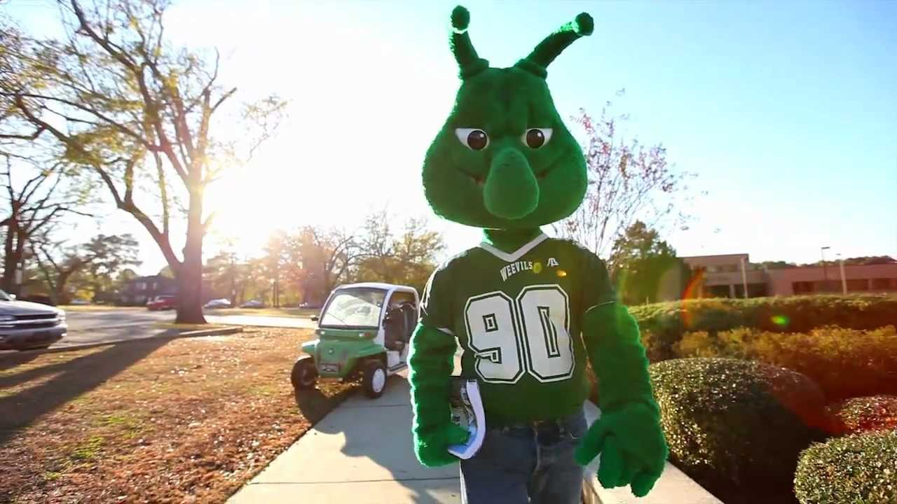 University Of Arkansas At Monticello The Boll Weevil