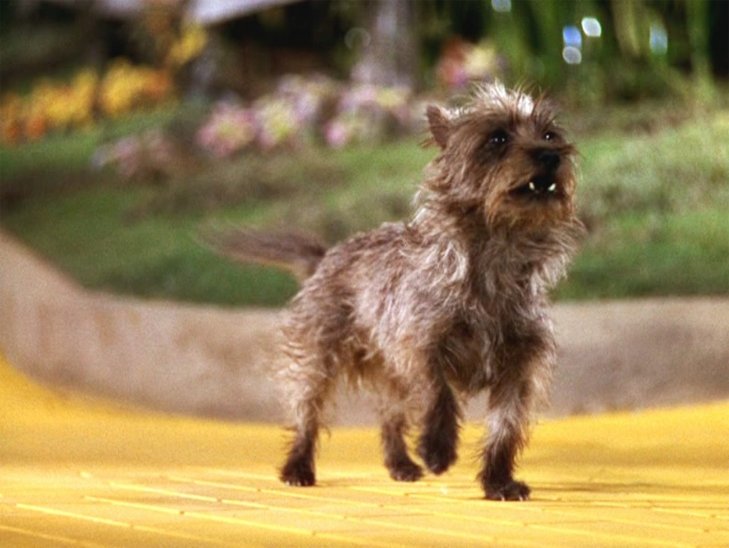 Competition Was Fierce For The Role Of Toto