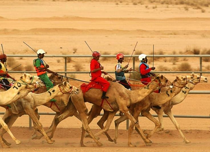 Camel Races1