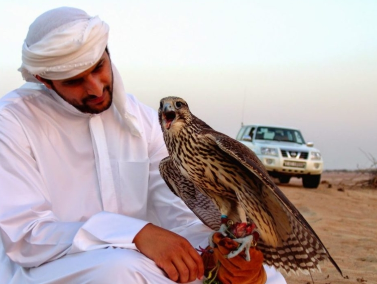 Falcons For Sport