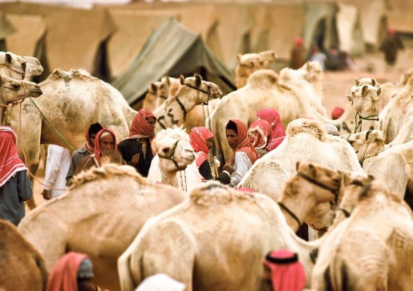 Market For Camels