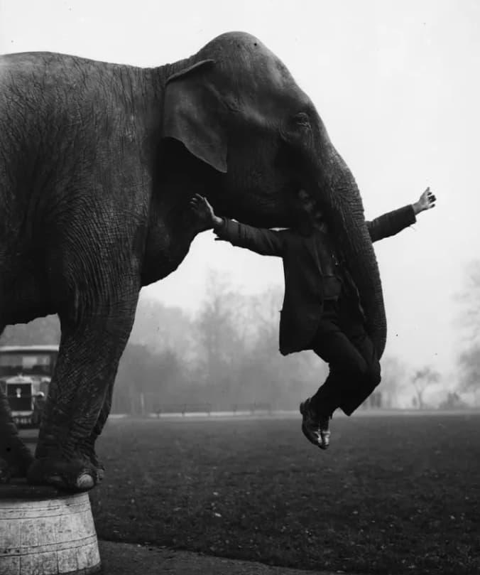 Dixie The Elephant