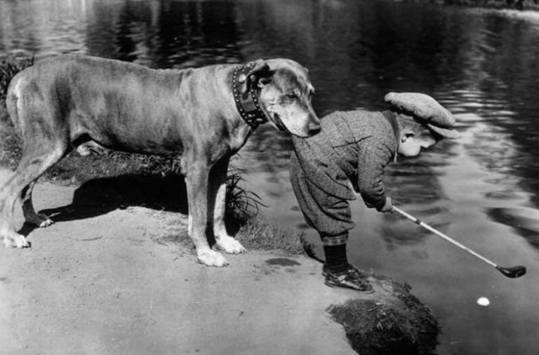 Dog Helping His Little Friend